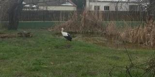 Csakugyan itt a tavasz: megérkeztek a gólyák Kölkedre