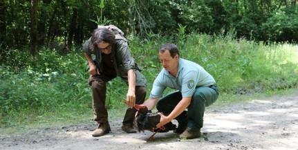Elindult Afrikából Zoltán, a GPS-jeladós gemenci fekete gólya