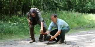 Hazaért Gemencbe Zoltán, a jeladós fekete gólya