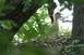 Mindössze öt fiókát költöttek ki sikeresen Bédában a fekete gólyák