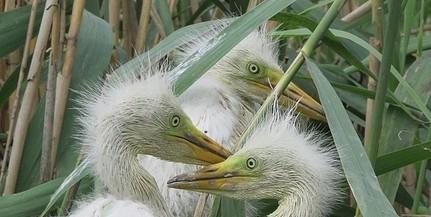 Védett madaraknak otthont adó vizes élőhelyek újulnak meg a Mohácsi-szigeten