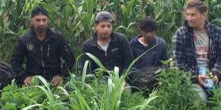 Nem kukoricáznak: újabb migránsokat fogtak Majs közelében