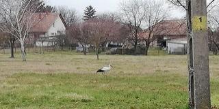 Hazatért az első gólya Kölkedre, minden bizonnyal hamarosan érkeznek a többiek is