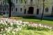 Virágba borult a város - Egy új, csodálatos látványt nyújtó közparkkal is gyarapodott Mohács