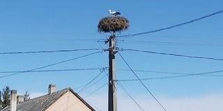 Megszámlálhatjuk a gólyákat szombaton Kölkeden