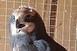 Babarcnál bajba került rétihéján segítettek állatmentők