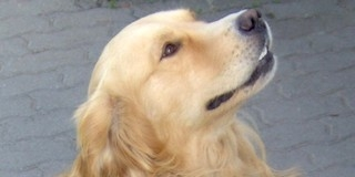 Állatorvosi ügyelet a hétvégén Mohácson és Baranyában
