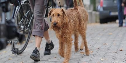 Hétvégén ismét oltják a kutyákat: kedvezményesen elvégeztethető a chip beültetése is