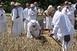 Ének a búzamezőn: újra megmutatják szombaton, hogyan zajlott gépek nélkül az aratás
