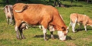 Ha tehene van, most ne legeltesse Mohácson