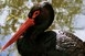 Fekete gólyák: rosszul sikerült a költési idény