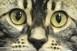 Egy igazi gyöngyszem a katasztrófavédőktől: mi a teendő, ha macska van a fán?