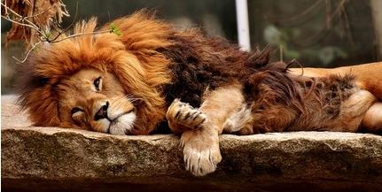 A népszerűség nagy átok a veszélyeztetett állatok számára