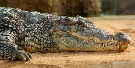 Krokodil ölt meg egy protestáns lelkészt keresztelés közben