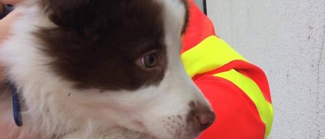 Kiskutyát mentettek a mentősök, beültették a sofőrfülkébe, majd a gazdi is előkerült