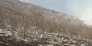 Tűz a Szársomlyón: a védett növények és állatok többsége átvészelhette a pusztítást