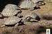 Kockakővel ütöttek agyon egy görög teknőst az állatkertben