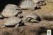 Elfogták a rendőrök a teknőst megkínzó ózdi nőt