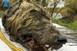 Jégbe fagyott, több tízezer éves farkasfejet találtak