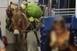 Felcsempésztek egy szamarat és egy kecskét egy vonatra