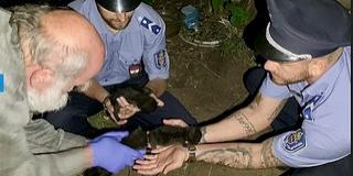 Rendőrök mentettek meg három, élve elásott kismacskát