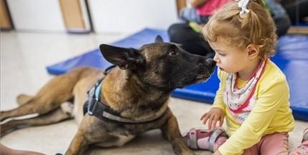 Magyar mentőkutya lett a világ legjobb romkutató kutyája