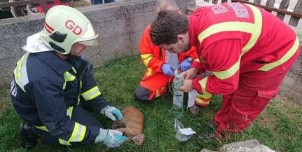 Égő házból kimentett kiscicát vettek gondjaikba a mentősök