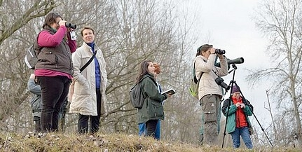 Téli madármegfigyelésre hív a nemzeti park a Dunán
