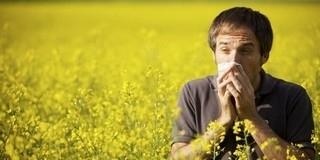 Az enyhe időjárás miatt máris itt a pollenszezon