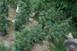 Marihuána-ültetvényt számoltak fel a rendőrök Baranyában
