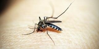 Egyre több helyen kell védekezni a szúnyogok ellen