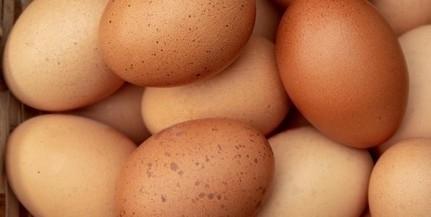 Vett mostanában tojást a Lidl-ben? Feltétlen olvassa el!