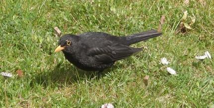 Itassuk a nagy nyári hőségben a madarakat!