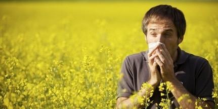 Még ez is: megjelentek az első allergén növények pollenjei