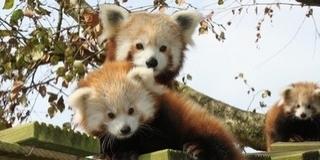 Kinevezték a Pécsi Állatkert új igazgatóját