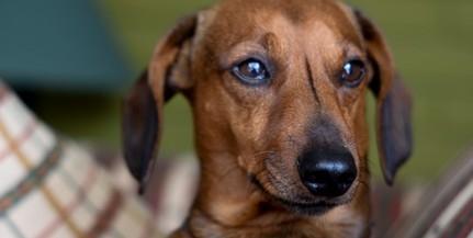 Mérgezett virslivel, csavarokkal átszúrt szalámival próbálta megmérgezni szomszédja kutyáját egy férfi