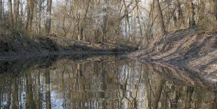 Változatos madárvilág vette birtokba a Duna egykori árterét