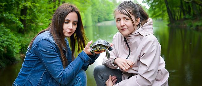 Ékszer- vs. mocsári teknősök: a baranyai élőhelyeken is dúl közöttük a harc