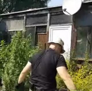 Égig ért a fű egy pécsi drogtermesztő udvarán, a rendőrök mentek szüretelni - Videó!