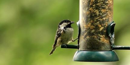 Átadták az első egyetemi madárbarát mintakertet Debrecenben