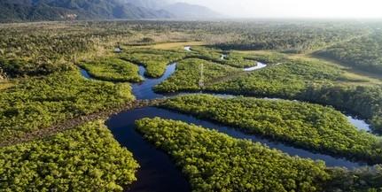 Károsítják a szaporodó duzzasztógátak az Amazonast