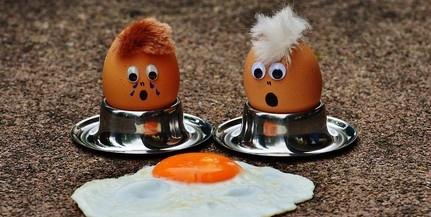 Növelni kell a magyarországi tojástermelést